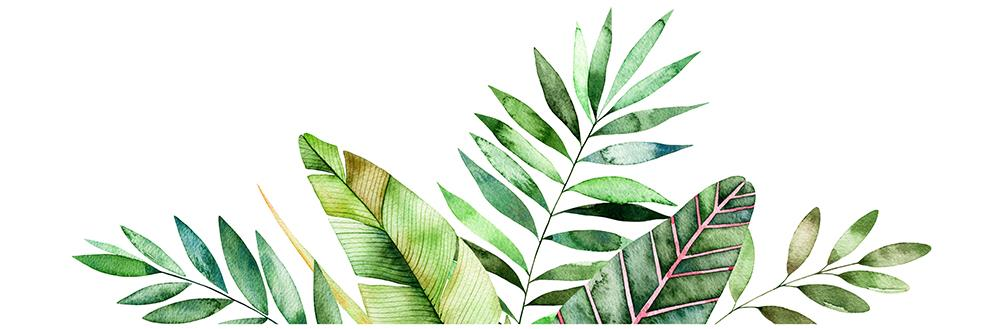 watercolor-leaves-illustration.jpg