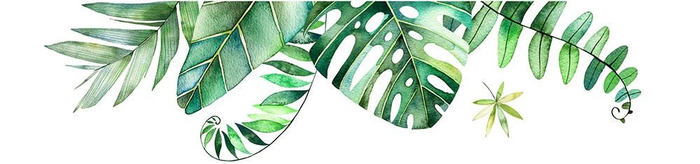 tropical-leaves-illustration.jpg